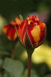 Du bist eine wunderschöne Blume