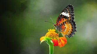 Geistige Heilung führt zu Verjüngung und Vitalität